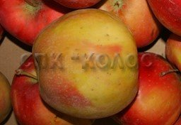 http://kolosnvp.ru/upload/iblock/f77/garden-apple-06.jpg