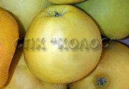 http://kolosnvp.ru/upload/iblock/cf1/garden-apple-04.jpg