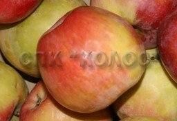 http://kolosnvp.ru/upload/iblock/7c9/garden-apple-07.jpg