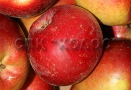 http://kolosnvp.ru/upload/iblock/eba/garden-apple-05.jpg