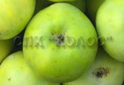 http://kolosnvp.ru/upload/iblock/fcc/garden-apple-08.jpg