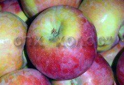 http://kolosnvp.ru/upload/iblock/d42/garden-apple-01.jpg