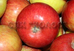 http://kolosnvp.ru/upload/iblock/0eb/garden-apple-02.jpg